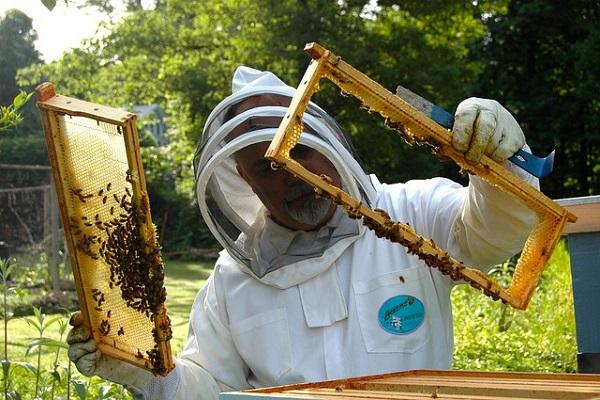 Honey farming image