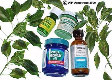 Camphor medicine