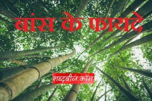 Bamboo ayurvedic benefits