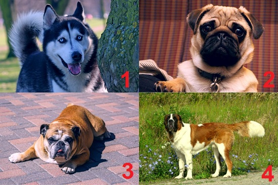 Foreign dog breeds
