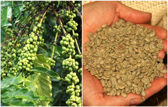Green Coffee kaise banaye