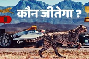 Cheeta ki raftaar kitni hoti hai